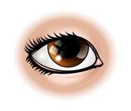 Eye Body Part. An illustration of a human eye body part stock illustration