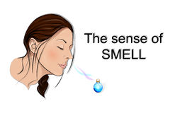 The sense of smell. Freely the girl inhales fragrance of perfume Royalty Free Stock Photography