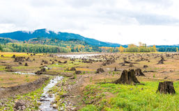 Sense of sunny beach point when low water level in autumn in mt.Rainier area,Washington,usa.  Stock Photography