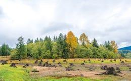 Sense of sunny beach point when low water level in autumn in mt.Rainier area,Washington,usa.  Stock Photos