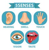 5 senses icon set. Touch, smell, hearing, vision, taste. Isolated on white background. Vector illustration. Stock Photos