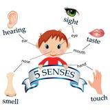 5 senses. Vector illustrating the five senses Stock Image