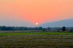 Senset em um campo do arroz. Imagens de Stock