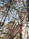 Sensibilità di novembre fotografia stock