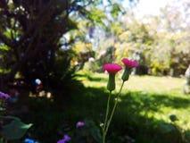 Sensible comme fleur Photo libre de droits