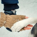 Sensitive above shot of couple hands holding the siberian husky paw. Winter time. Sensitive above shot of couple hands holding the siberian husky paw. Winter Stock Image