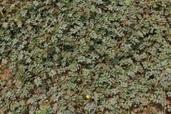 Sensitive plant Stock Photos