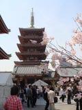 Senso Ji durante Sakura Fotos de archivo