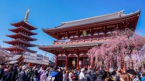 Sensoji świątynia podczas Sakura sezonu zdjęcia royalty free