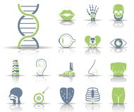 Sensory Organs & Bones - Iconset - Icons. Editable Vector Icons stock illustration