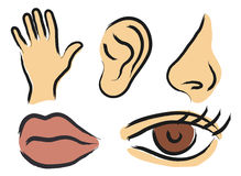 Sensory perception. Vector icons of human senses stock illustration