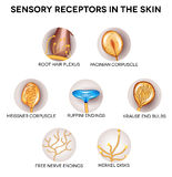 Sensory receptors in the skin. Anatomy of Sensory receptors in the skin. Round shape icons vector illustration