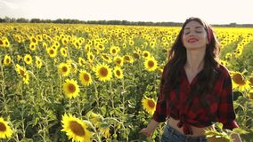 Sensual brunette girl walking in sunflower field stock video footage