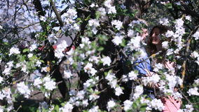 Sensual couple found privacy in blossoming cherry orchard under tree full of small white flowers. Handsome young man stock footage
