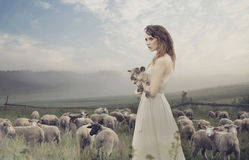 Sensual lady among sheeps Stock Photos