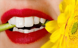 Sensual lips. Sensual red lips macro photo of a woman  biting a daisie flower Stock Image
