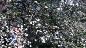 Sensual moment in cherry orchard under tree full of small white flowers. Handsome young man embracing beautiful girl stock video