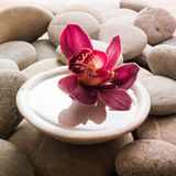 Feng shui sensuality. Sensual orchid in water for eternal hedonism stock photography