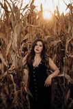 Sensual young woman with black dress in a cornfield stock photo