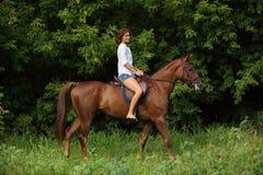 Sensuele jonge horseback van de het meisjesrit van het schoonheidsland Stock Afbeelding