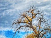 Sent Autumn Sky och träd Royaltyfri Foto