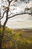 Sent dagsolsken i filialer på den Assateague ön, Maryland Royaltyfri Foto
