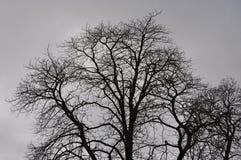 Sent höstträd i en dag med den tunga molnräkningen Royaltyfri Bild