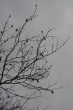 Sent höstträd i en dag med den tunga molnräkningen Royaltyfri Foto