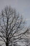 Sent höstträd i ottan Royaltyfri Foto