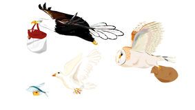 Sent of Mail and parcel By Flying. This is image of imagine about sent mail and parcel by animal that flying.eagle, owl, pigeon and Fish flying Stock Image