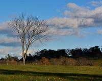 Sent nedgångnedgångfält i New England under en solig blå himmel Royaltyfria Bilder