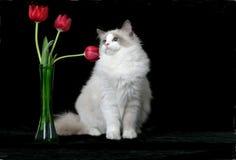 Senta l'odore dei fiori immagine stock libera da diritti