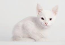Sentada blanca del gatito imagenes de archivo