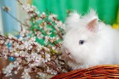 Sentada bunniy del bebé lindo en una cesta de madera en la tabla con las flores fotos de archivo libres de regalías