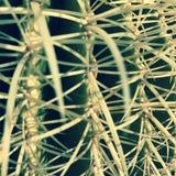 Sentada del cactus Imagen de archivo