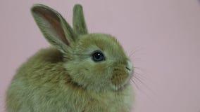 Sentada del conejo de conejito almacen de video