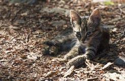 Sentada del gatito Fotos de archivo