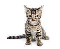 Sentada del gatito (2 meses) Fotografía de archivo