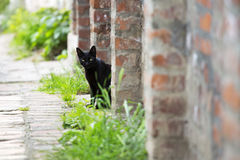 Sentada del gato negro Fotos de archivo libres de regalías