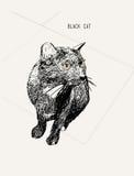 Sentada del gato negro, línea arte, llustration del bosquejo del drenaje del iHand Fotografía de archivo