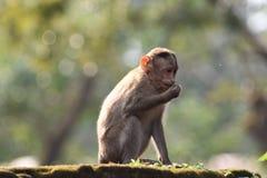 Sentada del mono fotografía de archivo