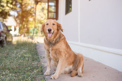 Sentada del perro Imagenes de archivo
