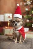 Sentada del perro de la Navidad Foto de archivo libre de regalías