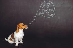 Sentada del perro de perrito y sueño con la comida natural en un bubb del pensamiento foto de archivo libre de regalías