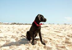 Sentada del perro del perfil Imagenes de archivo