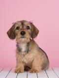 Sentada linda del perrito del perro basset Fotografía de archivo