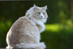 Sentada masculina del gato Imágenes de archivo libres de regalías