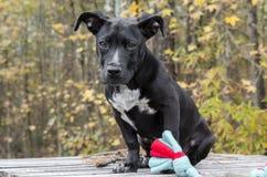 Sentada mezclada negra del perro de perrito de la raza Imagen de archivo libre de regalías