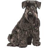 sentada negra del perro del Schnauzer miniatura del vector Foto de archivo libre de regalías