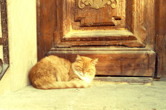 Sentada roja del gato Foto de archivo